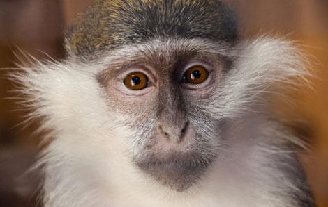 Streit um Affen-Selfies ist beendet